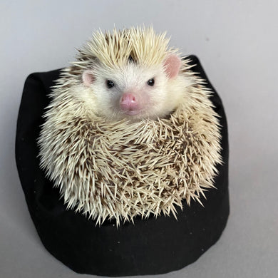 Mini bean bag photo prop