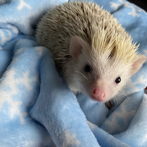 Snowflake cuddle fleece handling blankets for hedgehogs and small pets.
