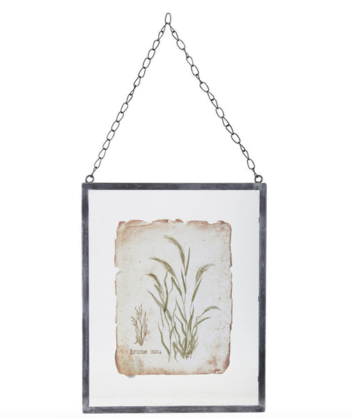 Brome Grass in Metal Frame