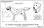 Signature Dog Blueprint