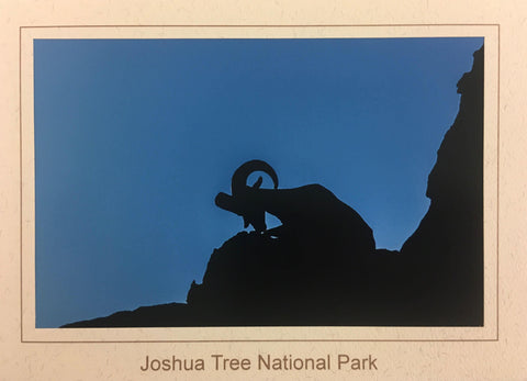 Silhouette Desert Bighorn Sheep Note Card