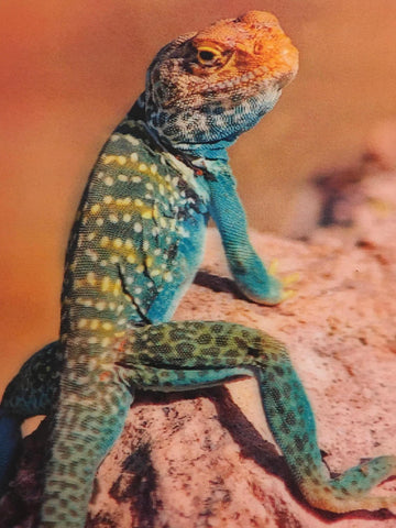 Collard Lizard 3-D Postcard