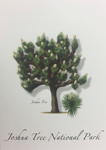 Joshua Tree Note Card
