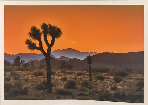Joshua Tree Sunset Note Card