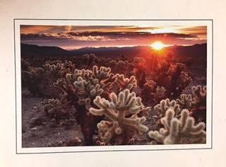 Cholla Cactus Garden Note Card