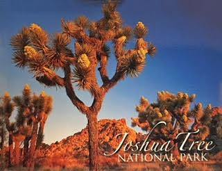 Joshua Tree Badge Magnet