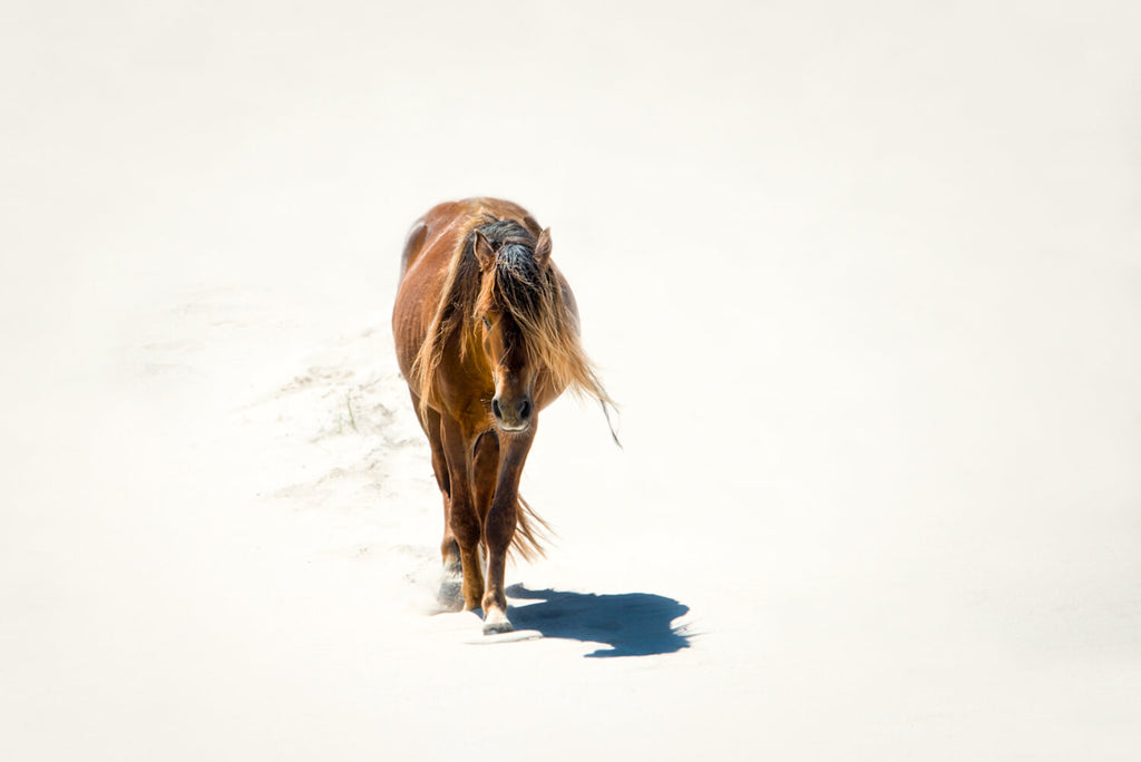Lone Stallion in the Sand