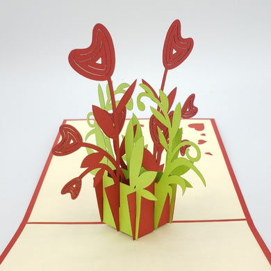 Heart Flower Potted Plant