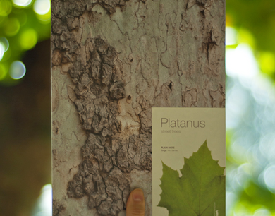 Woodpecker Note-Platanus (small:blank)
