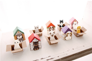Kitty House Memo it Hoya (American short hair)