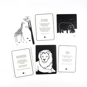 Animal flash cards African animals