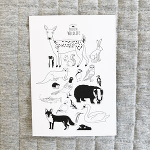 British Wildlife Postcard - The Little Black & White Book Project