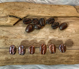 Real Coffee Bean Stud Earrings