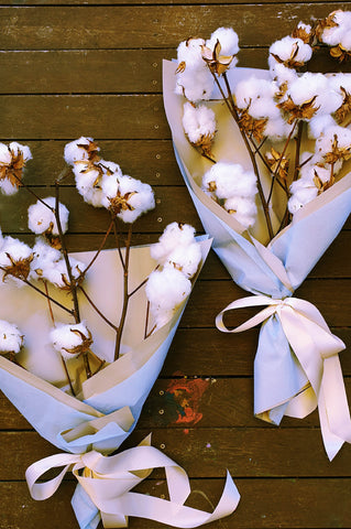 Dried flower delivery Canberra - Cotton