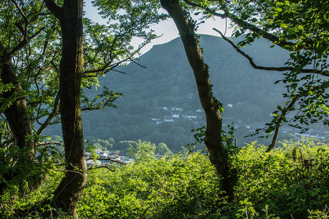 A sneak look through the trees at the Garth Mountain from the Graig Mountain
