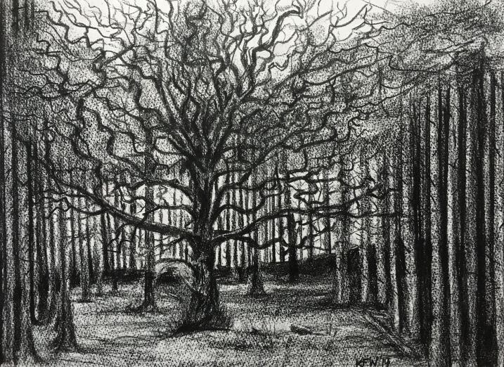 Original charcoal drawing of curly branched tree in the Coed y Bedw woodland area, Gwaelod y Garth