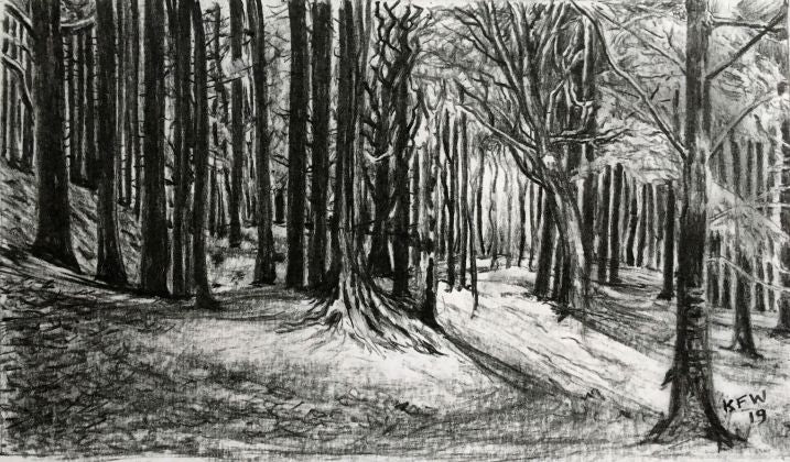 Original charcoal on paper drawing illustrating the Coed y Bedw woodland area