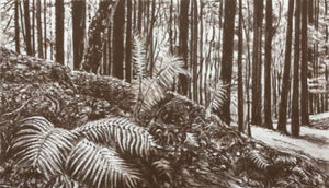 Original charcoal drawing of the beautiful Coed y Bedw woodland area around Gwaealod y Garth