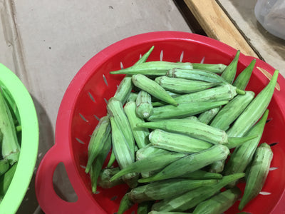 Okra-Fresh Green Okra