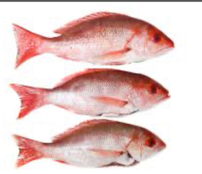 RED SNAPPER FISH ( FROZEN)