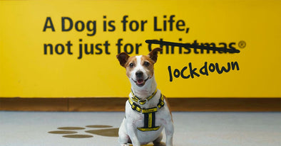 Buy a Pound Puppy & Help Rehome a Dogs Trust Dog | Wigwam Toys Brighton