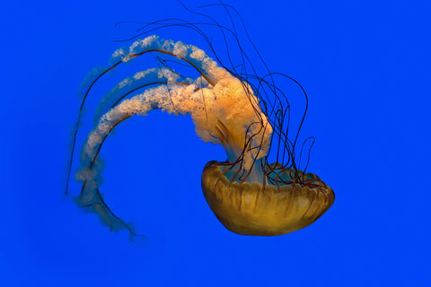The JellyFish Life