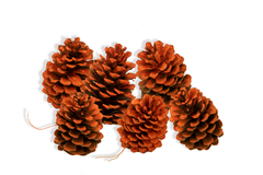 Orange Pine Cones Lee Display Fall Season Decorating Tips