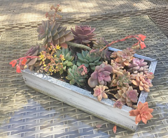 Lee Display's decorative planter box and gardening designs