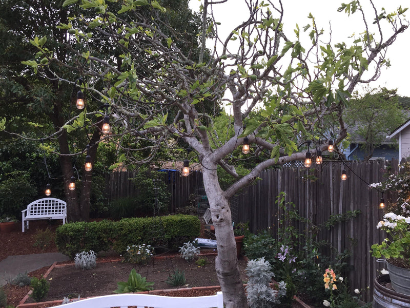 Outdoor Patio Hanging String Lights with 24in Spacing Sold by Lee Display Shop Here