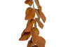 Artificial Magnolia Leaf Garland