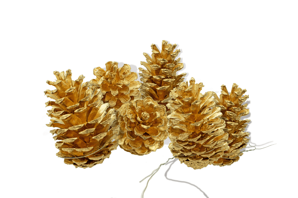 Gold Pine Cones Sold in Pack of 6!    Real natural and locally sourced Pine Cones painted in orange to match your fall decorations and Christmas decor.  Natural elements blend brilliantly into the fall and winter seasons.