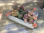 Make Your Own Succulent Planter Box