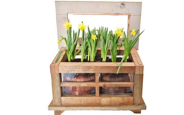Lee Display Terrarium Redwood & Glass Terrarium Box w/ Door