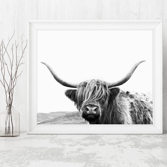 Highland cow canvas print - evasdecor.com