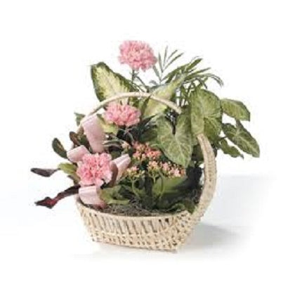basket filled with easy care house plants