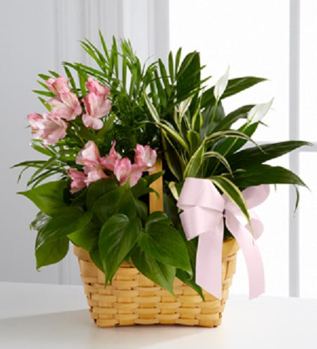 basket filled with easy care houseplants with fresh cut flowers and a bow,