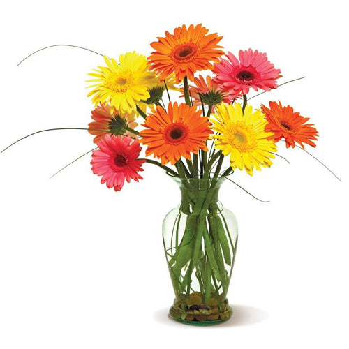 mixed color gerberas in a range of pretty colors,