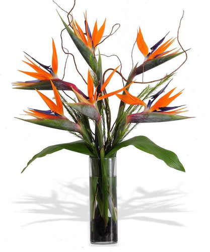A cylinder vase filled with birds of paradise.