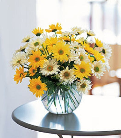 White and yellow daisy poms artistically designed in a glass bubble bowl.