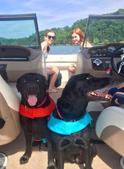 Friendly black labs on a runabout