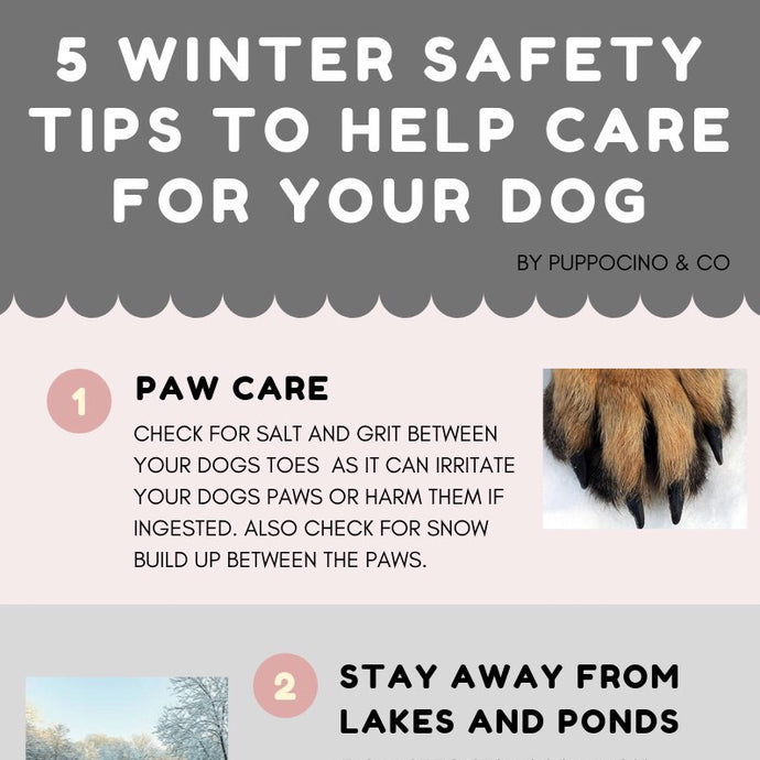 5 WINTER SAFETY TIPS TO HELP CARE FOR YOUR DOG