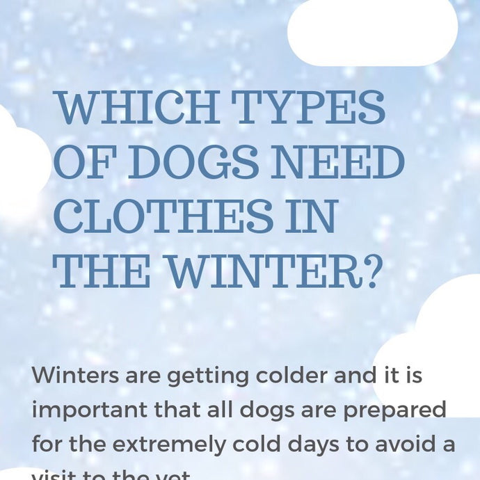 WHICH TYPES OF DOGS NEED CLOTHES IN THE WINTER?