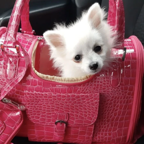 Lets Go Shopping Carrier - Pink