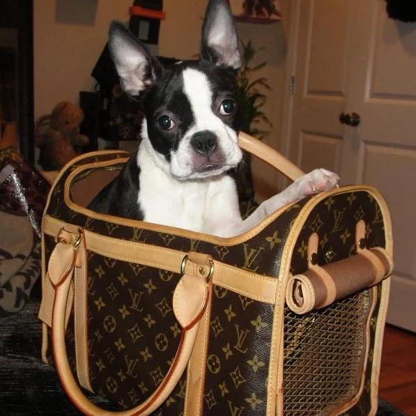 Louis Vuitton Pet Carrier 50