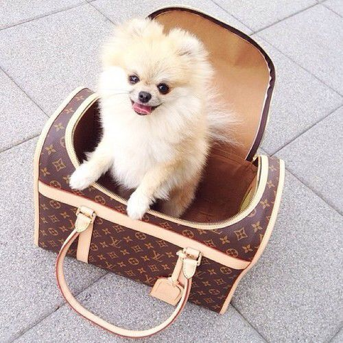 Louis Vuitton Pet Carrier 40