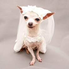 Load image into Gallery viewer, Bridal Dress for Dog Wedding Occasion with Veil