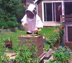 Beekeeping Services