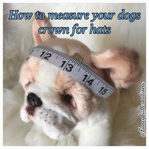 how to measure a dogs head for a hat