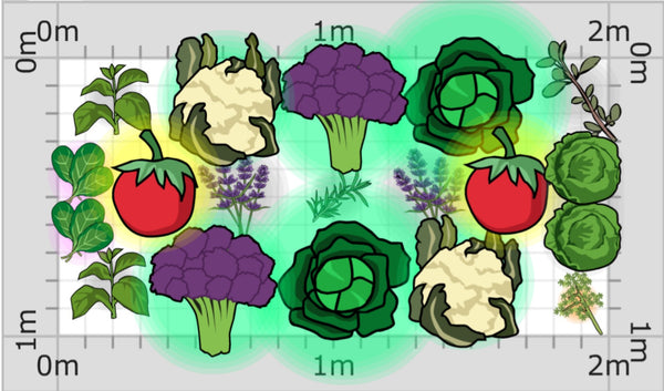 Companion Planting - The Basics