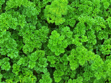 Load image into Gallery viewer, CURLY PARSLEY